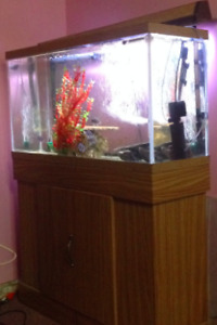FISH TANK INCLUDES EVERYTHING