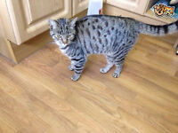 Missing, tabby & spotted cat from Sowerby Bridge!