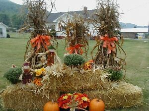 Golden straw bales for your wedding decor / special events! Kitchener / Waterloo Kitchener Area image 4