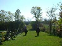 Outdoor board - private horse farm near Kars/North Gower