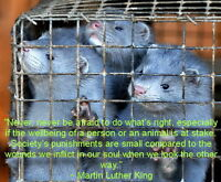 ** Attention: Current or Former Mink Farm Workers **