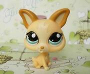 Littlest Pet Shop Chihuahua