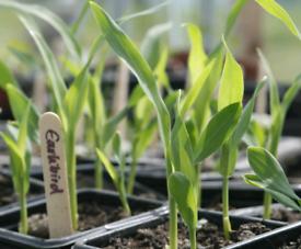 Organic Veg Final Stock 🍓🌱🌿