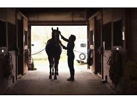EQUINE GROOMING SERVICES