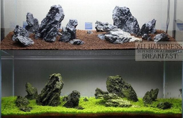 Aquascaping ADA Seiryu Stone rock aquarium tropical fish plant shrimp