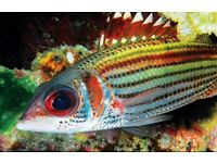Marine squirrel fish for sale