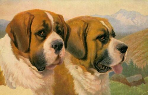 Unusual Old Postcard 2 Saint Bernard Dogs Portrait Germany 1915 MKB Gorgeous