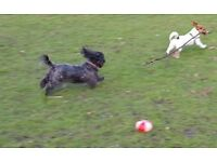 Chiswick dog walking, doggie day care, dog boarding, pet sitting