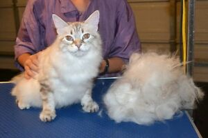 Spring grooming specials at Countryside Care Care.