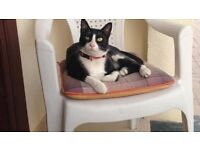MISSING BIDDULPH - BLACK AND WHITE CAT.