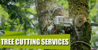 Professional Tree cutting Services