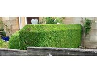 Gardener offering an Autumn clear up, hedge reduction or trim, moss removal. No obligation quote
