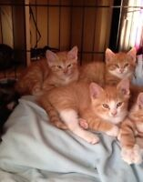 3 male kittens to give away