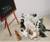 Puppy class?