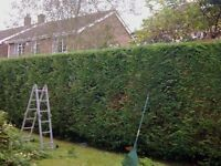 Tree cutting & hedge trimming service