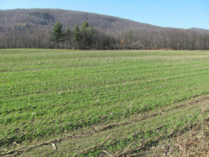 Looking to buy land for acreage $$$