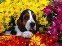 Pet Grooming Services in your home!