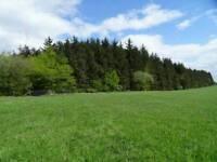 Woodland near Edinburgh