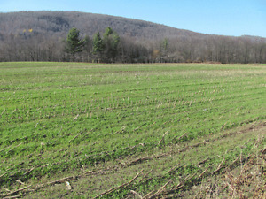 Looking to purchase land $$$