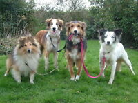 Four Paws Up Pet Care, pet sitting and dog walking