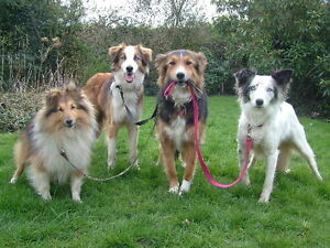 Dog Walking and Dog Sitting Services in Elmira Ontario