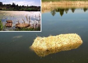Straw bales for garden mulch / control pond algae / dog houses! London Ontario image 2