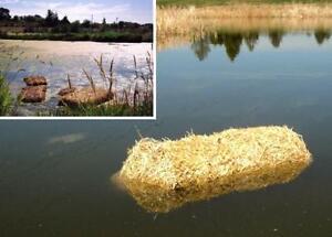 Straw bales for garden mulch / control pond algae / dog houses! London Ontario image 4