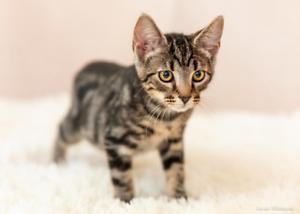Benji rescue kitten NK2869 VET WORK INCLUDED