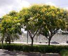 Flowering Trees Dry Light
