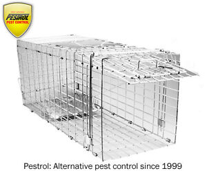 Pestrol-Possum-Trap-Large-Buy-from-the-importer-Cats-dogs-foxes-possum-cage