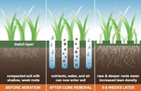 Aeration Lawn Service - Fall Aeration - Fall Fertilizer optional