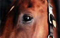 Horse bedding/Litter for livestock/Cheval Ripe