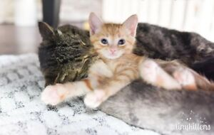 Reliable and experienced cat boarding & sitting!