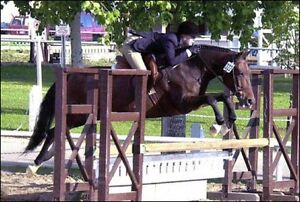 Mobile English/Western Certified Riding Lessons - I come to you!