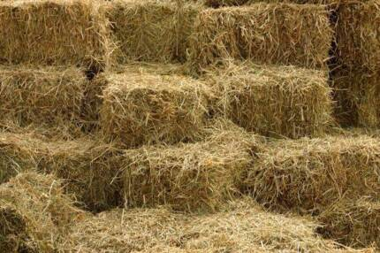 Oats square (small) Hay Bales for sale - $12.50 each
