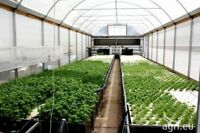 Land to lease / rent / borrow / for aquaponics and chicken farm