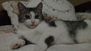 Beautiful and Sweet Female kittens available for adoption