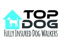 Dog walker, day boarding, pet sitter and pet transportation