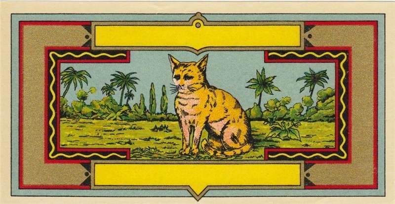 1 dye label cat