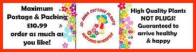 jo-anna-cottage-plants-shop