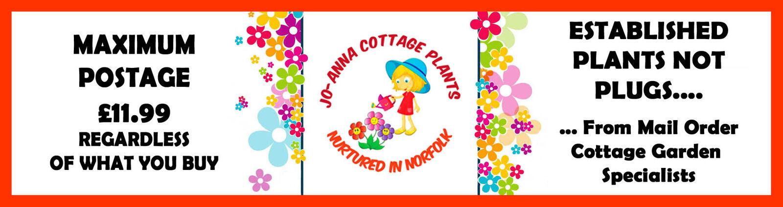 jo-anna-cottage-plants