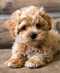 WANTED: Small Dog Puppy Neerim South Baw Baw Area Preview