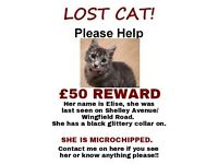REWARD FOR MISSING GREY FEMALE CAT