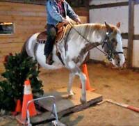 Reduced - 16 year old paint mare (unregistered)