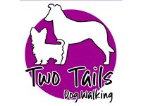Experienced & Professional Dog Walker Cardiff - Dog Walking Services