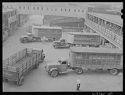 Union Stockyards (Union Stockyards,Chicago,Cook County,Illinois,IL,Farm Security Administration,4)
