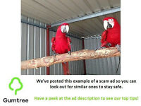 pair of Scarlet macaws with cage - Read the description before responding to the ad!