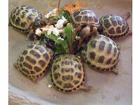 4 baby tortoises- taking deposits