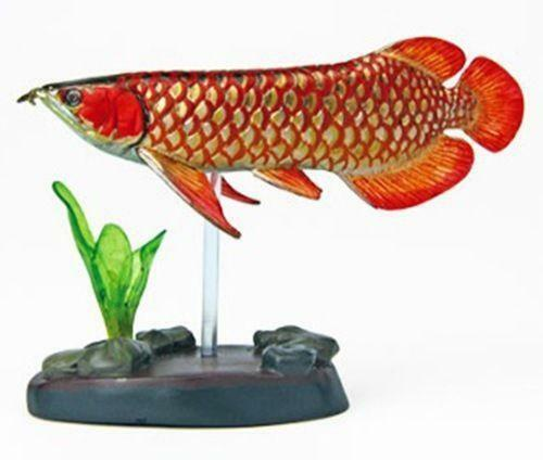 Jardini Arowana For Sale: Arowana Fish