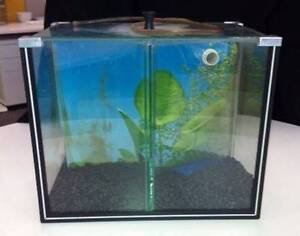 Breeding Fish Tank - Ideal for new Babies Bonner Gungahlin Area Preview